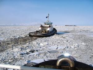 arctic-15